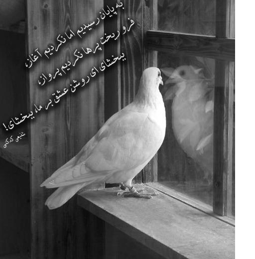 پرنده تنها